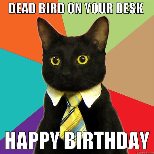 DEAD BIRD ON YOUR DESK DEAD BIRD ON YOUR DESK HAPPY BIRTHDAY Business Cat