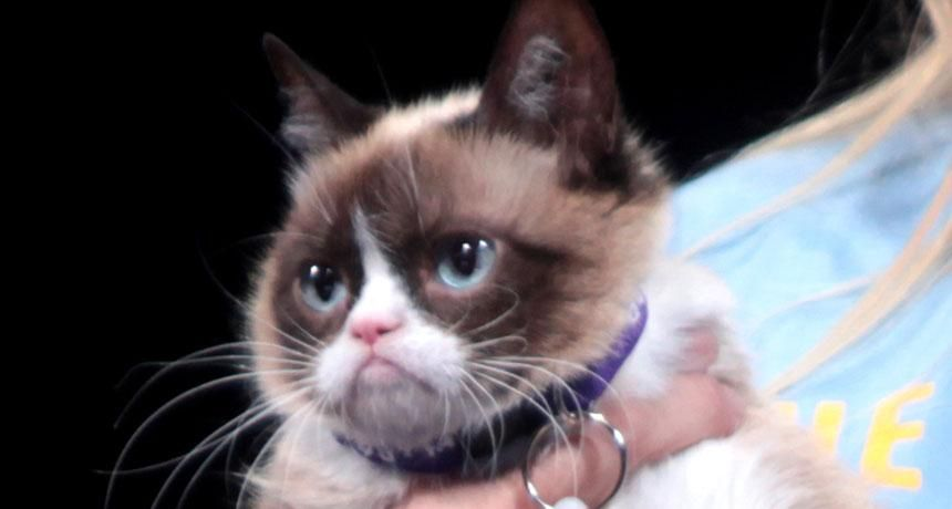 """Grumpy Cat"" pic """