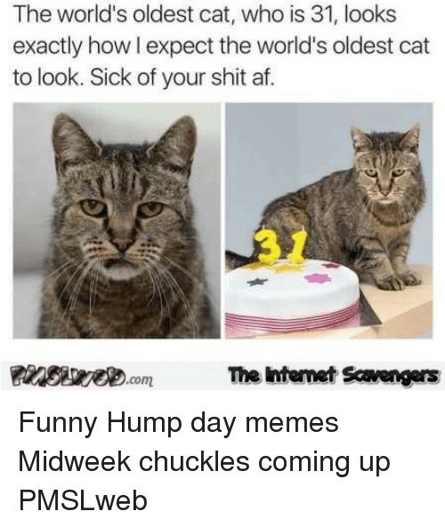 Af Funny and Hump Day The world s oldest cat who is 31