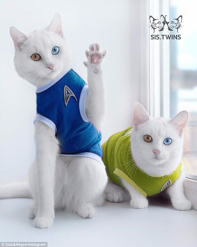 Iriss and Abyss dressed up in cute cat Star Trek uniforms