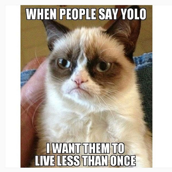 yolo meme posted by funnymemesfunnyphotos90 Grumpy Cat