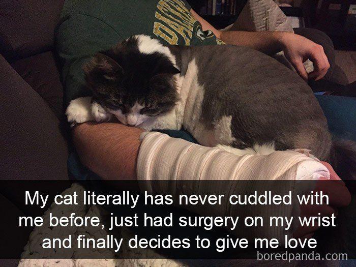Funny Cats s Snapchats