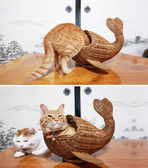 funny cats if it fits i sits 20