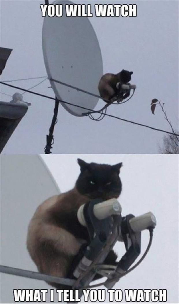 Cat cat Cats cats funny