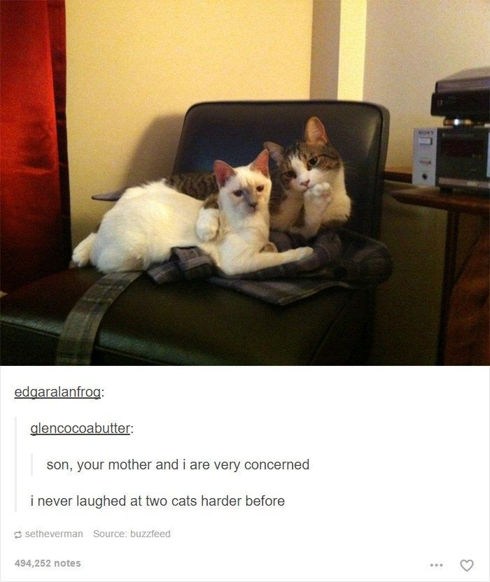 Collect the Unique Funny Cat Pictures with Captions Tumblr