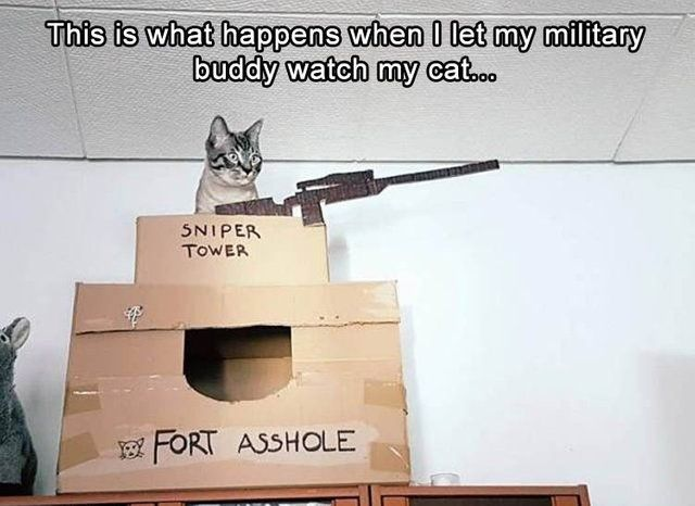 This is what happens when I let my military buddy watch my cat