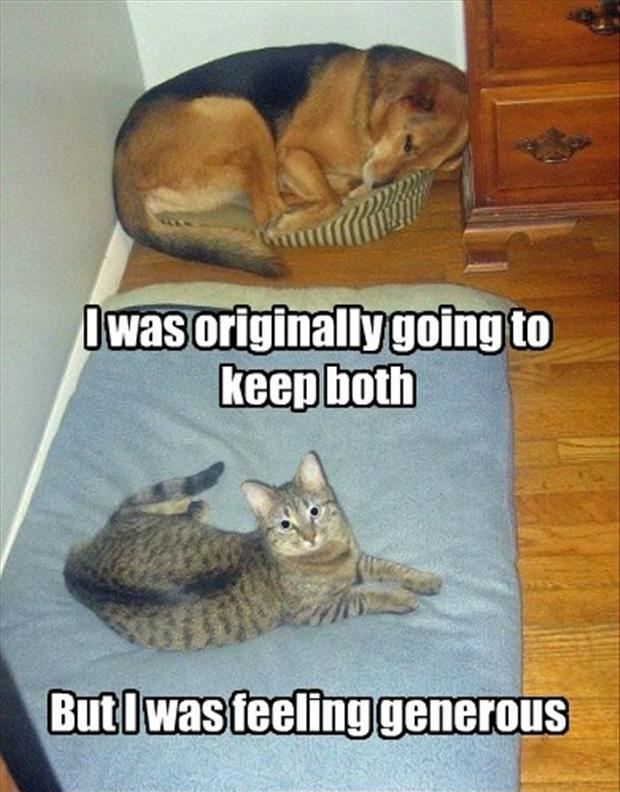 both are cute Funny Animals ♡ Pinterest