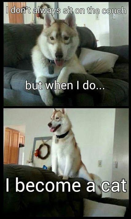 Google Funny Husky Husky Humor Cute Husky Funny Dogs Funny Animals