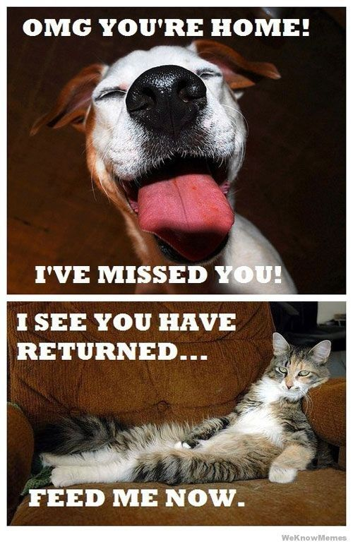 Reaction of cat and dog when their owner returns