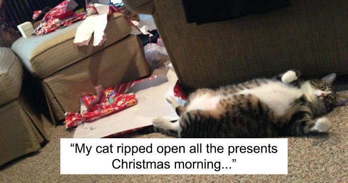 99 Dogs And Cats That Destroyed Christmas
