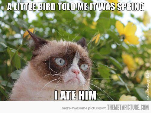 Grumpy Cat wel es spring…