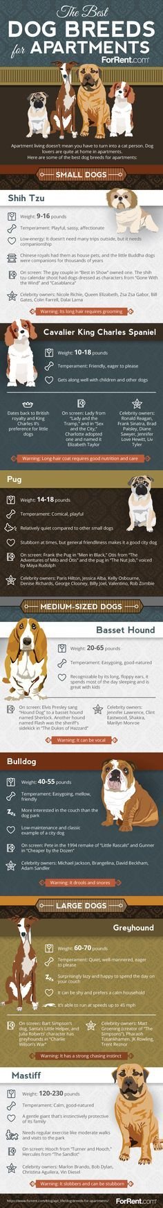 Apartment Living Choosing the Right Dog Breed