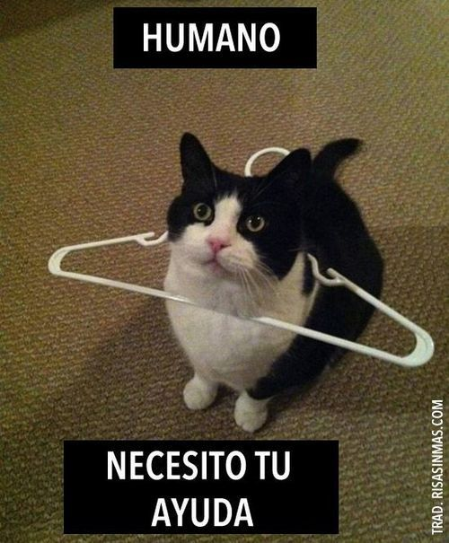 Humano necesito tu ayuda Human I need your help Funny Cat Quotes
