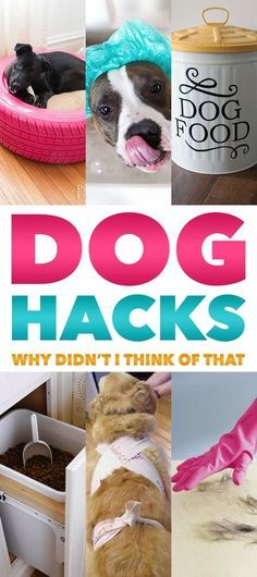 Dog Hacks Why Didn t I Think That