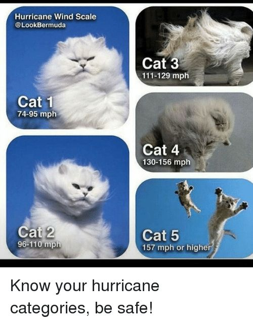 Cats Funny and Bermuda Hurricane Wind Scale Look Bermuda Cat 1 74