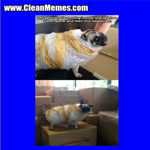 Author cleanmemesPosted on September 3 2015 Format ImageCategories Clean Funny Clean Memes Dog MemesTags Clean Funny Clean Memes