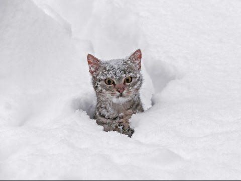 Cats Playing in Snow pilation