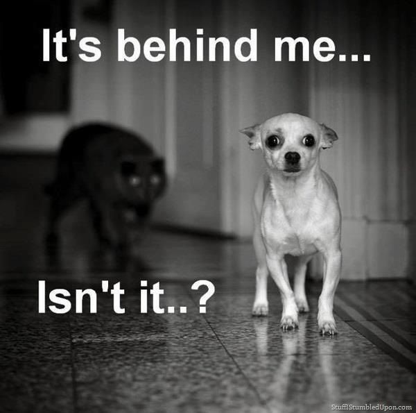 Download the Fascinating Funny Scared Dog Memes