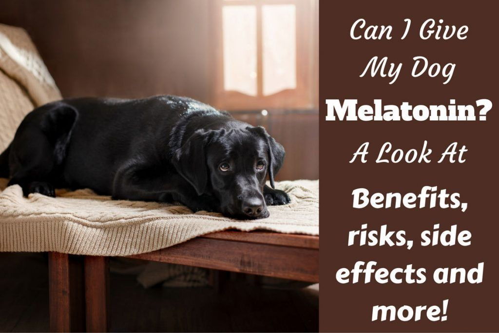 Can I give my dog melatonin 1 1024x683