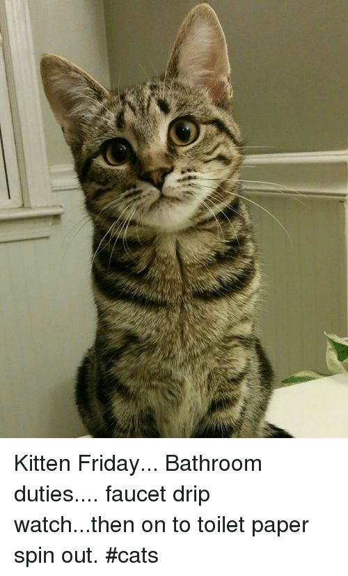 Cats Friday and Memes Kitten Friday Bathroom duties