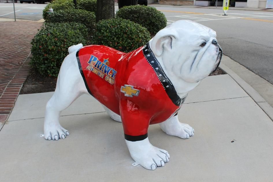 "Who let the Dawgs out Tifton ""unleashes"" Bulldog statues downtown News"