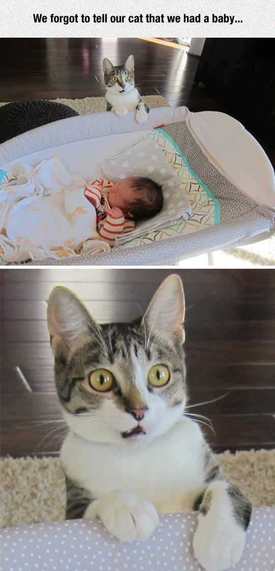 funny baby surprised cat face