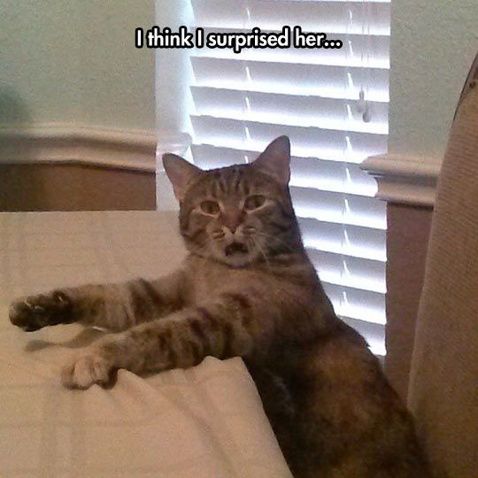 Download the Fresh Funny Pictures Surprised Cat