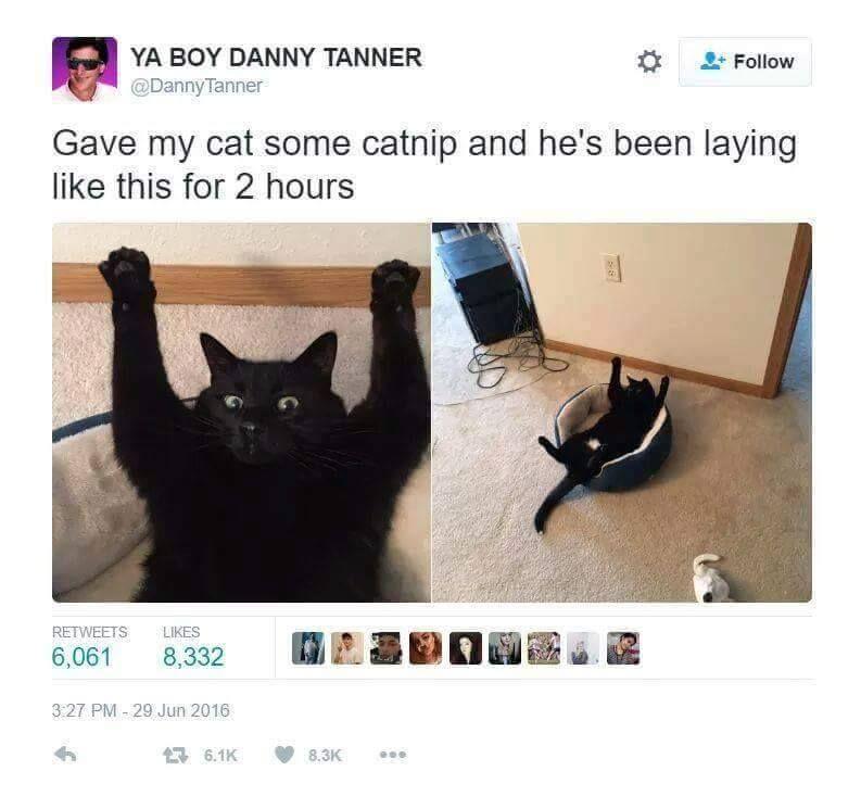Catnip got me like whoa