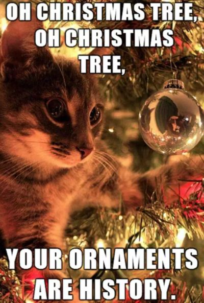 Make sure you shatterproof ornaments No seriously There s nothing cats like to play with more than shiny hanging balls