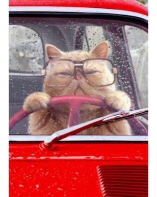 Avanti Press Cat Driving Car Funny Birthday Card