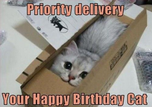 Priority delivery Your Happy Birthday Cat