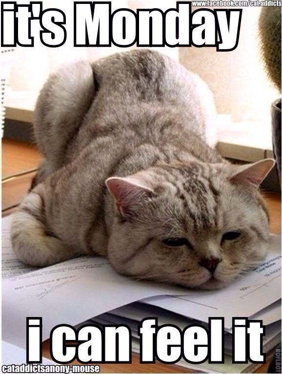 Cat Monday quote