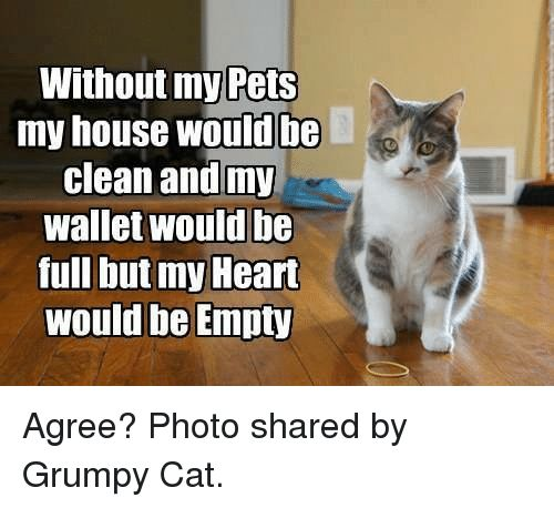 Cats My House and Grumpy Cat without my Pets my house would be