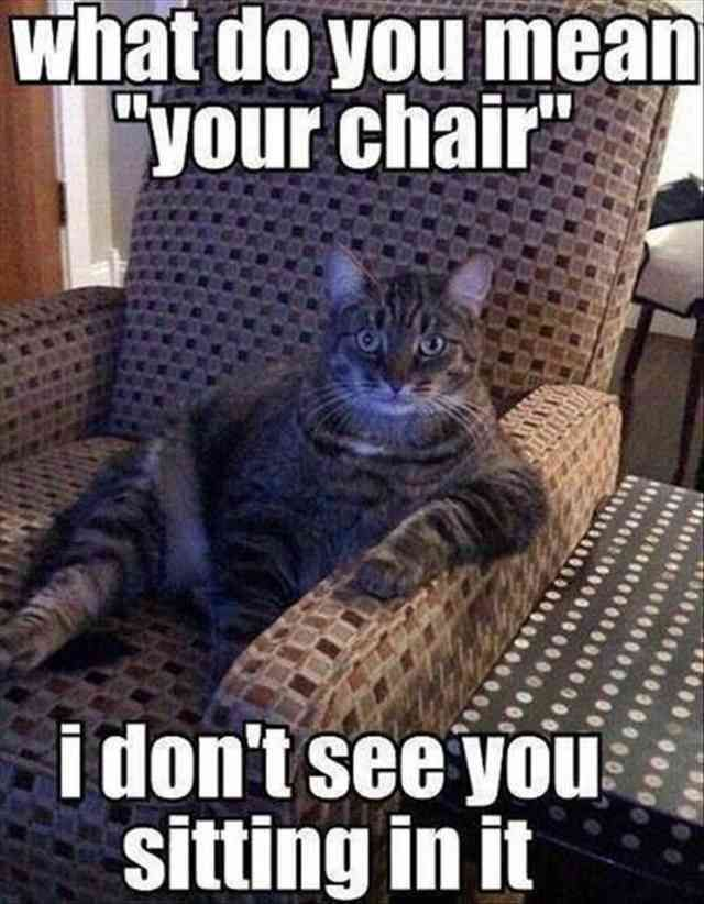 Savannah cat Kitten Dog Humour Cat food Pet Meme what