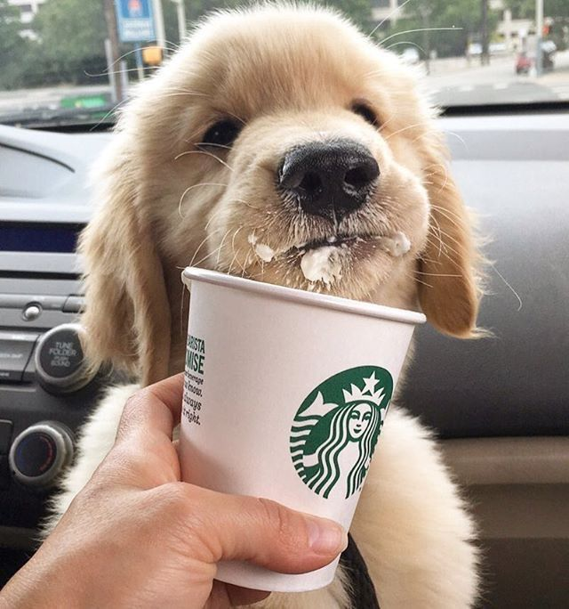 Puppy latte shaken not stirred Make it a double starbucks by buddy dass