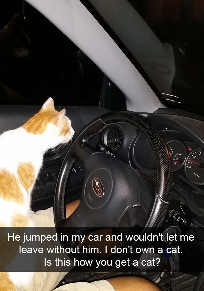 24 hilarious cat snapchats that will make your day instantly better 20