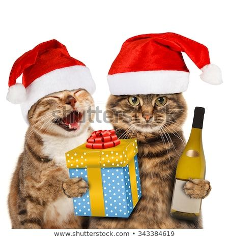 Funny cats with christmas hat
