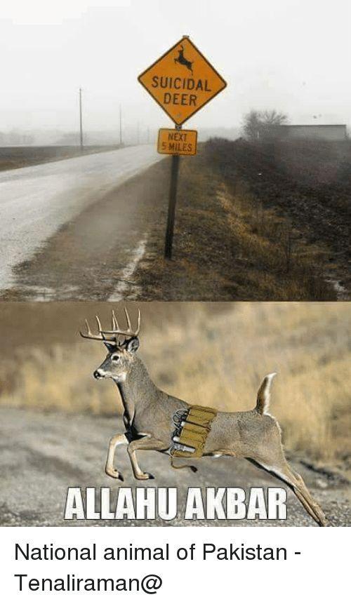 Animals Anime and Deer SUICIDAL DEER NEXT 5 MILES ALLAH AKBAR National animal