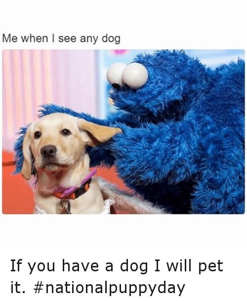Dogs Funny and Pets Me when I see any dog If you have