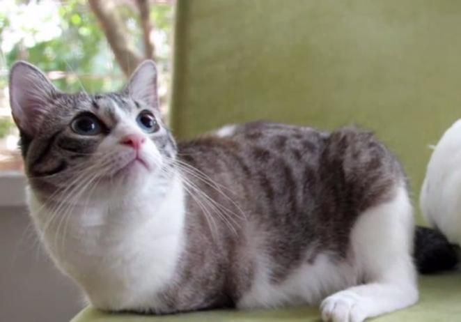 Adoption Stories Lil Bunny Sue Roux Kitten Bowl