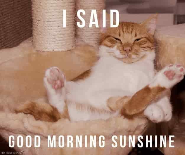 i said good morning sunshine meme