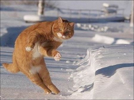 Download the New Funny Cat Pictures In Snow