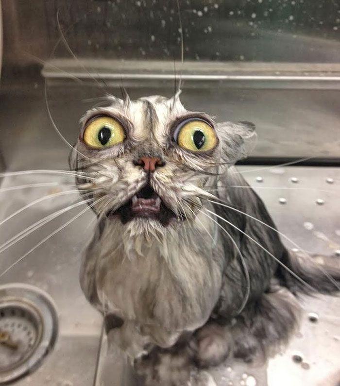 22 Hilarious Wet Cats
