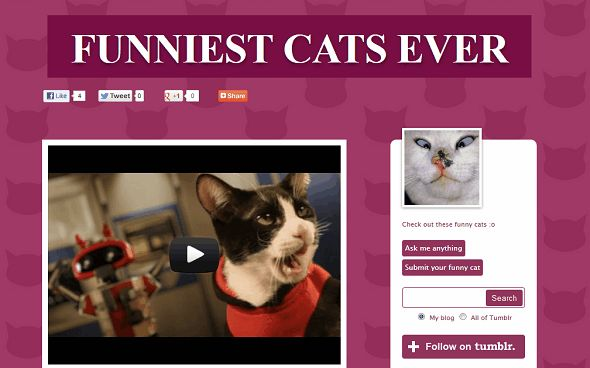 If you re going to label your website Funniest … Ever then you need to make damn sure you deliver the goods Thankfully Funniest Cats Ever just about