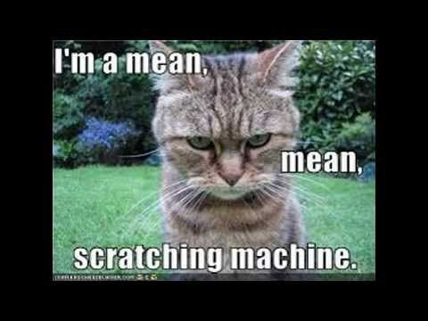 Download the Prodigious Funny Cat Pictures with Captions Youtube