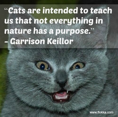 33 The Funniest Quotes About Cats