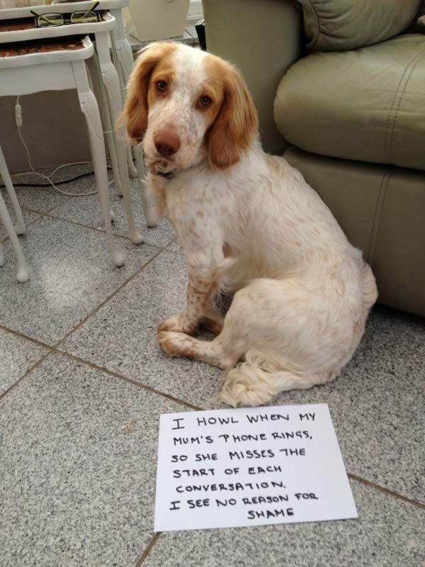 Download the Prodigious Funny Dog Shaming Pictures