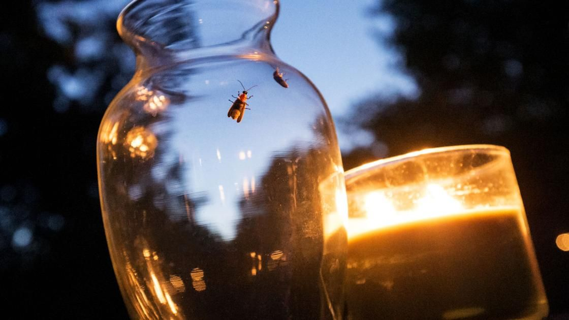 June weather means fireflies are showing lawns are glowing Local