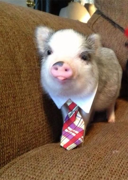 """An Standard And Appropriate Dress For """"You re Hired"""" Job Interview"""