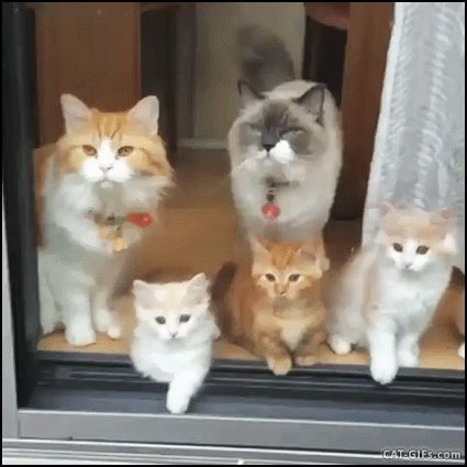CAT GIF • Funny family 5 cute cats and kittens bobbing their heads in sync Dog and cat GIF s Pinterest
